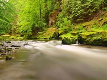 Water level under fresh green trees at mountain river. Fresh spring air in the evening Royalty Free Stock Photography