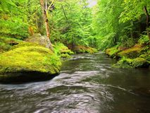 Water level under fresh green trees at mountain river. Stock Photography