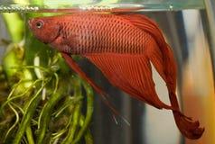 Water life fish. In aquarium Royalty Free Stock Images