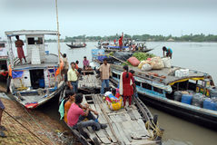 Water life of Sundarban Royalty Free Stock Photography