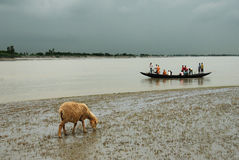 Water life of Sundarban Stock Photos