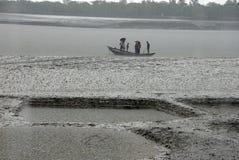 Water life of Sundarban Stock Image