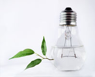 Water in light bulb and leaves Royalty Free Stock Photography