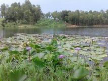 Water Lili royalty-vrije stock fotografie