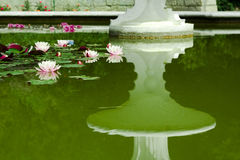Water - lilies. Summer holiday in mountains of Crimea Royalty Free Stock Photo
