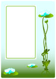 Water lilies. Fon with water lily and frogs. Vector illustration Stock Photos