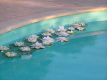 Water lilies. A group of waterlilies floating in a pool Royalty Free Stock Images