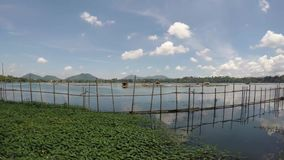 Water lilies and bamboo fence at lake. San Pablo City, Laguna, Philippines - September 8, 2015: Bamboo Pole used to make Fish cages Fence at lake shore. Tracking stock video