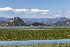 Water lilies carpeting Lake Skadar, Montenegro. In summer stock photography