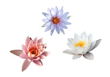 Water Lilies Collection (3 For 1) Stock Images