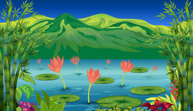 The water lilies and flowers at the lake. Illustration of the water lilies and flowers at the lake Stock Photography