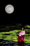 Water Lilies Full Moon. Fuchsia and pink water lilies and green lily pads on dark pond with full moon in dark sky Stock Images