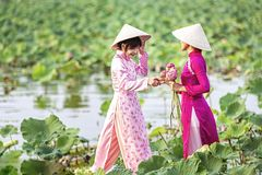 Water lilies on hand. Two Vietnamese woman is sitting on a wooden boat and collecting pink lotus flowers. Female boating on lakes royalty free stock photos
