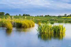 Free Water Lilies In The Pond Of The Field Stock Image - 48656811