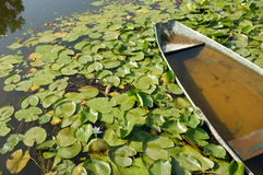 Water Lilies On Lake Skadar In Virpazar, Montenegro Royalty Free Stock Photos