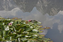 On water lilies pond Royalty Free Stock Photography