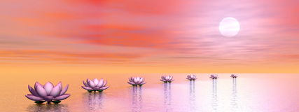 Water lilies steps to the sun - 3D render Stock Image