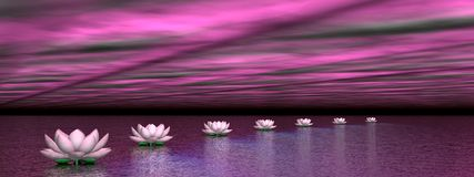 Water lilies steps to the sun - 3D render Stock Photos
