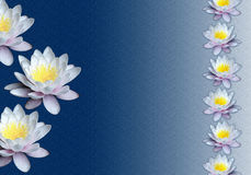 Water lilies texturised background Stock Photography
