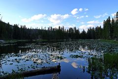 Water lillies in Nymph lake, Rocky Mountain National Park, Colorado,. USA stock photography