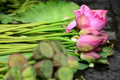 Water Lillies. For sale in a market in China stock images