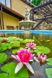 Water lillies at Sklene Teplice. Water lillies at fountain lake near Jaskynny kupel bath house at Sklene Teplice during summer, Europe, Slovakia royalty free stock photography