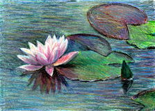 Water lilly Stock Illustratie