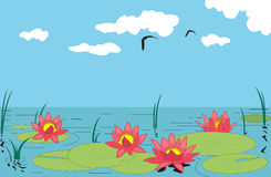 Water lilly. Beautiful water lilly. Vector illustration Stock Photography