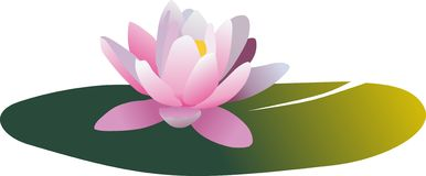 Water lilly. Vector Water lilly nymphaea - Irene Royalty Free Stock Images