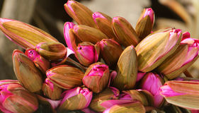 Water lilly boeket, mooie bloem Stock Afbeelding