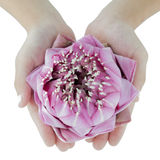 Water lilly on lady hand Royalty Free Stock Photos