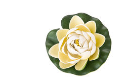 Water lily. Flower isolated on white background Royalty Free Stock Photo