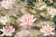 Water Lily. On dirty grunge textured canvas Stock Photo