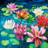 Water Lily. Original oil painting of beautiful water lily(Nymphaeaceae) on canvas.Modern Impressionism Royalty Free Stock Photo