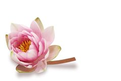 Free Water Lily Royalty Free Stock Images - 5342319