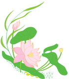 Water lily. An oriental decoration of water lily in the pond royalty free illustration