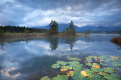 Water lily on alpine lake in autumn Royalty Free Stock Photo