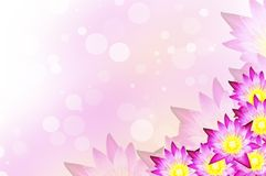 Water lily  background Royalty Free Stock Photo
