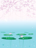 Water lily background. Stock Photography