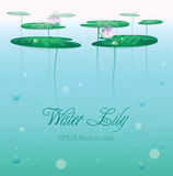 Water lily background. Royalty Free Stock Photography