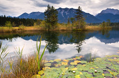 Water lily on Barmsee in Alps Stock Photography
