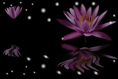 Water lily  on black background 1 Royalty Free Stock Photos