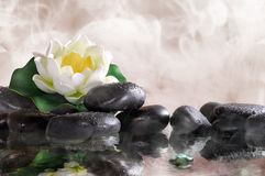 Water lily on black stones with water and vapour. Water lily on black stones in the warm water, steam background. Spa, relaxation, meditation and health concept Stock Photography