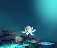Water lily on blue pond background Stock Photo