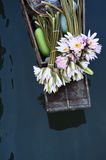 Water lily in the boat on river Royalty Free Stock Photography