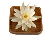 Water lily in a bowl royalty free stock image