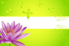 Water lily and butterfly Stock Photos