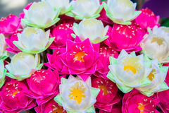 Water lily Stock Photos