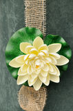 Water lily decoration Stock Photo