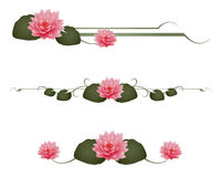Water Lily Dividers Stock Photo